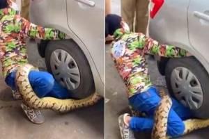 Vídeo mostra enorme píton que invadiu carro e parou o trânsito na Índia
