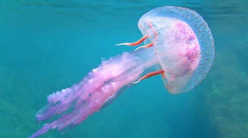 Insólito misterios del mar