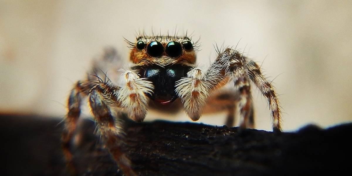 Viralizan en TikTok: Captan a una araña gigante comiendo una ¿lagartija?