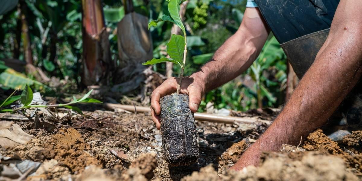Ahora los agricultores pueden obtener seguros para sus cultivos telefónicamente