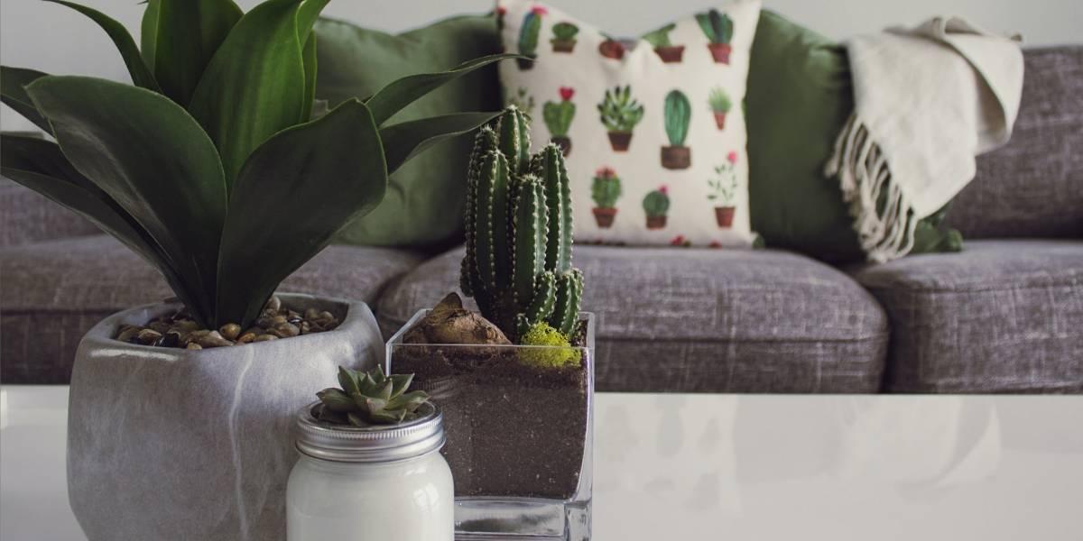 Feng Shui: Saiba como atrair boas energias enquanto harmoniza ambientes da sua casa
