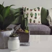 Plantas que auxiliam a renovar a energia da sua casa