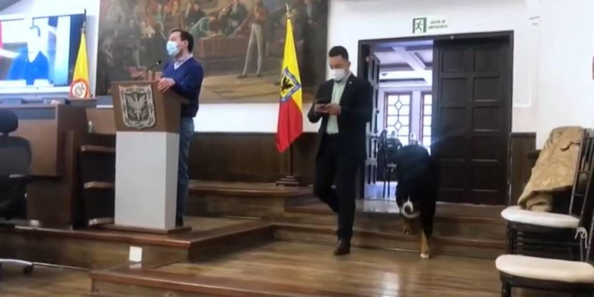 (VIDEO) Concejal de Bogotá aprovechó la soledad del Cabildo para llevar a su perro
