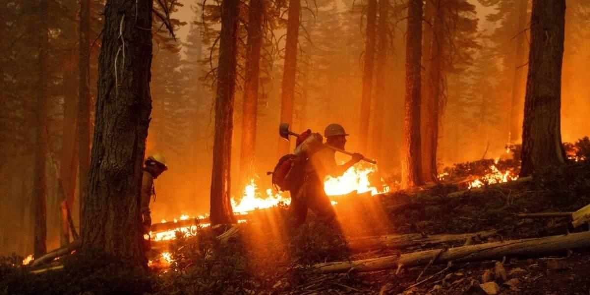 Voraz incendio en California amenaza cultivos legales de marihuana