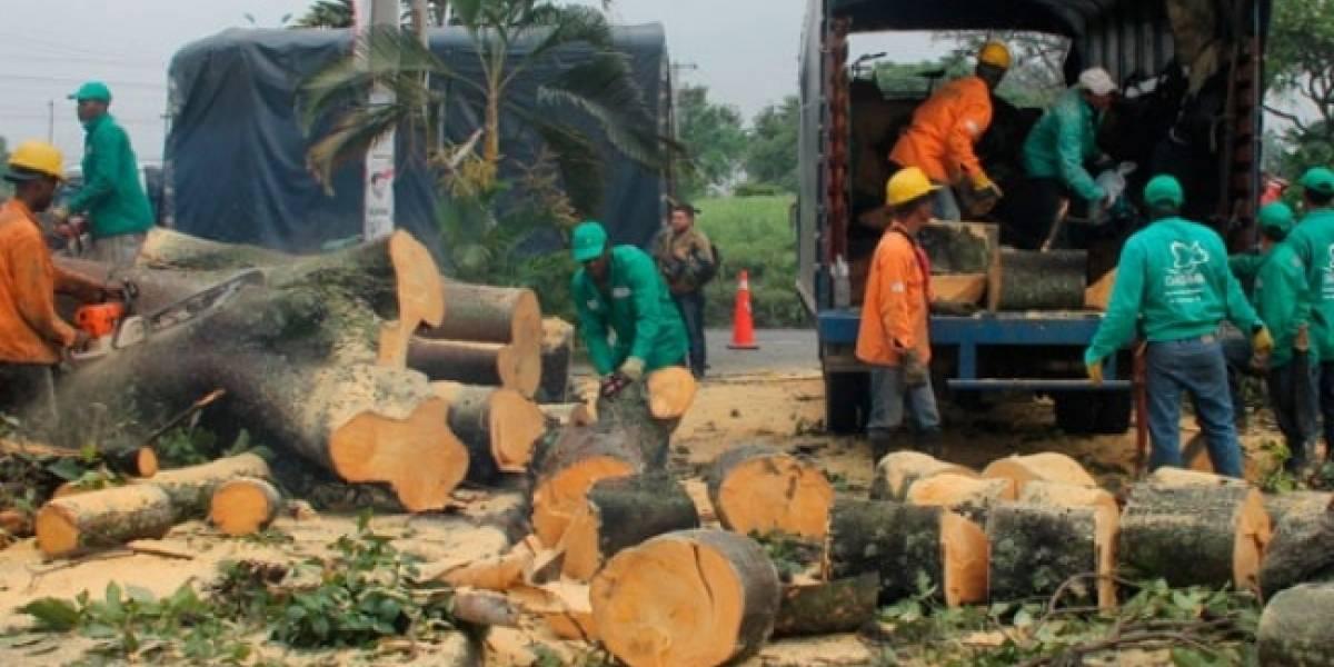 Autoridad ambiental habría permitido tala de árboles a cambio de una camioneta