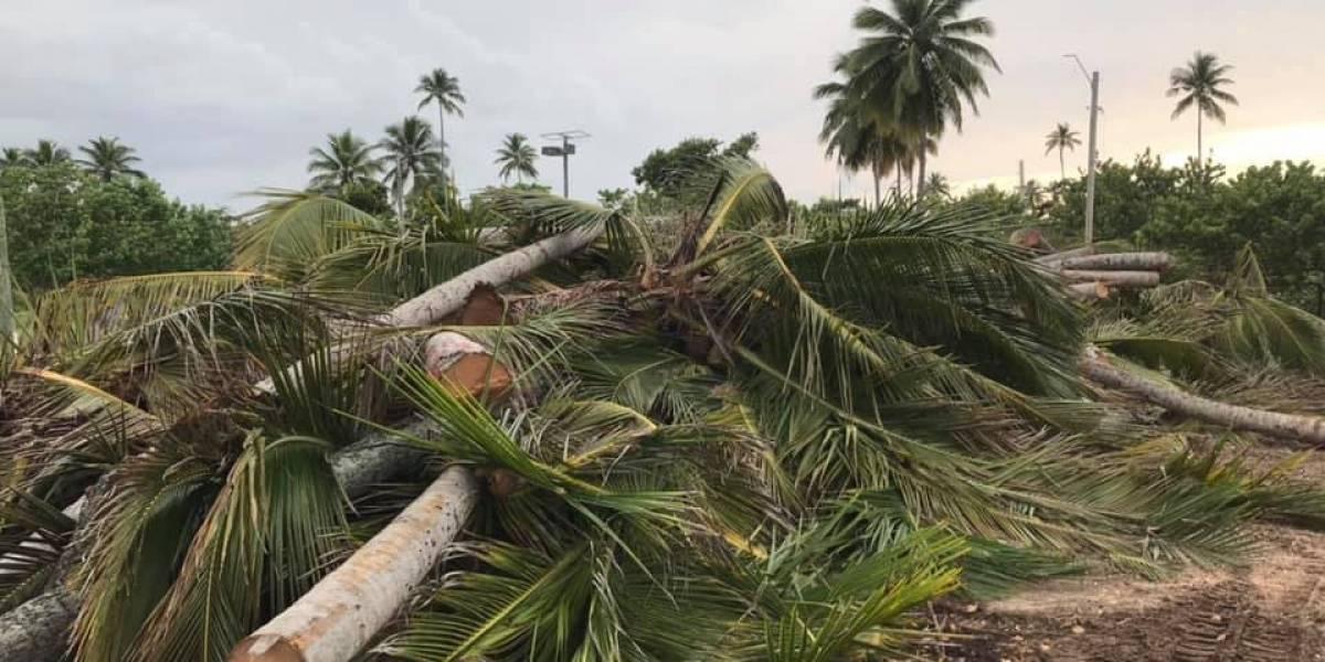 Fueron más de mil palmas y árboles talados por el DRD y DNRA en Cerro Gordo