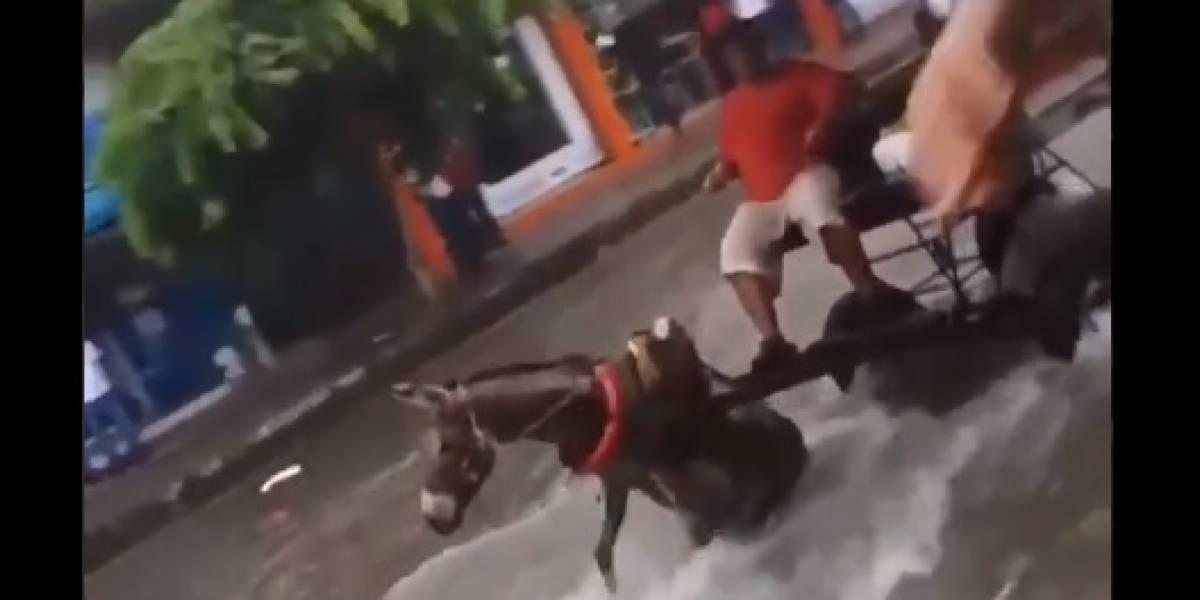 En video quedó registrado aterrador caso de maltrato animal contra un burrito