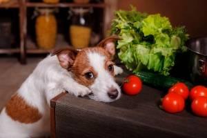 https://www.metrojornal.com.br/estilo-vida/2020/09/28/por-que-os-caes-nao-devem-comer-tomates.html