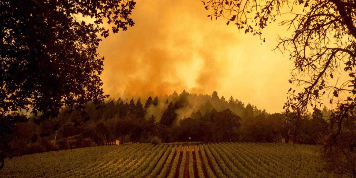 Respiro para bomberos que combaten incendio forestal el región vinícola en California