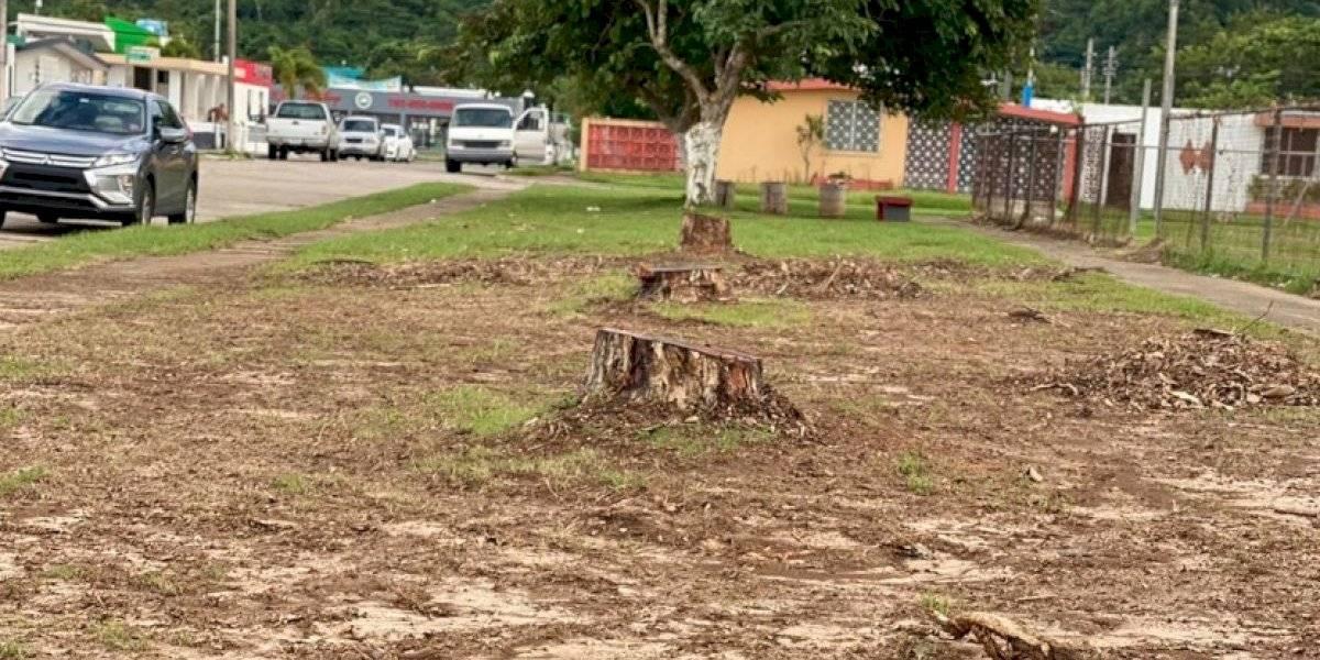 Denuncian tala de árboles en parque en Vega Baja por autorización del DRNA