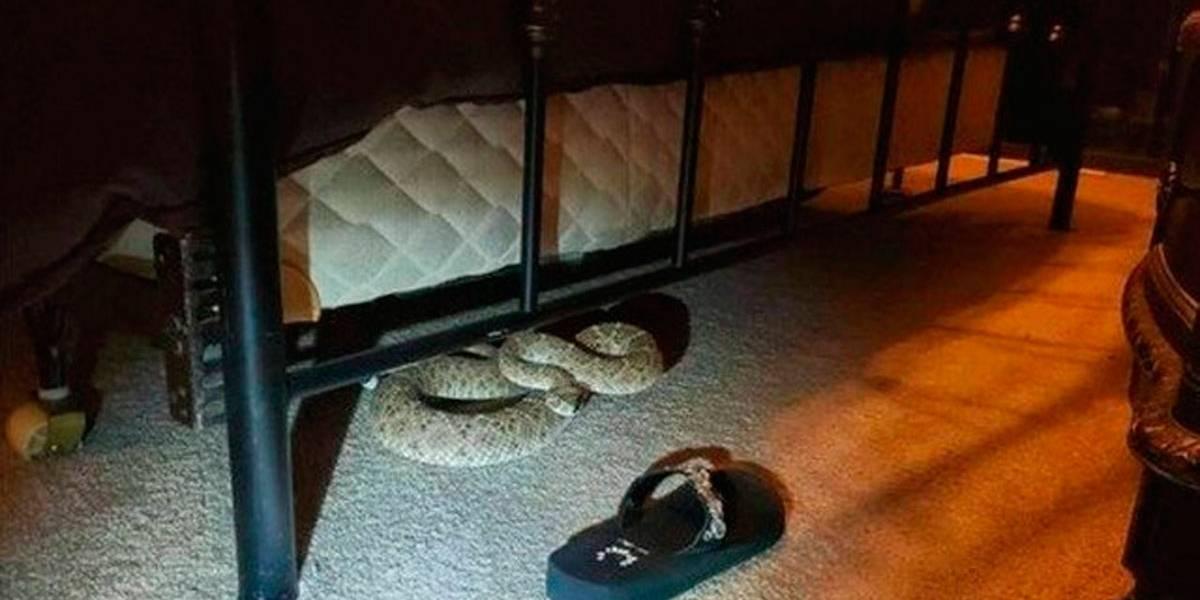 Casal sai para fumar e na volta encontra cobra cascavel embaixo da cama