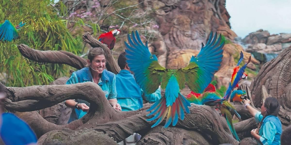Disney+ comparte la magia de  trasbastidores de Animal Kingdom