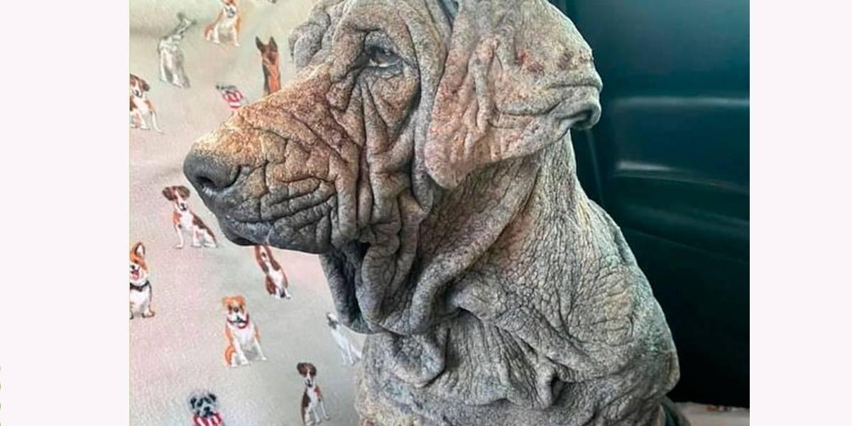 Cadela abandonada é achada tão maltratada que sua pele parece de pedra