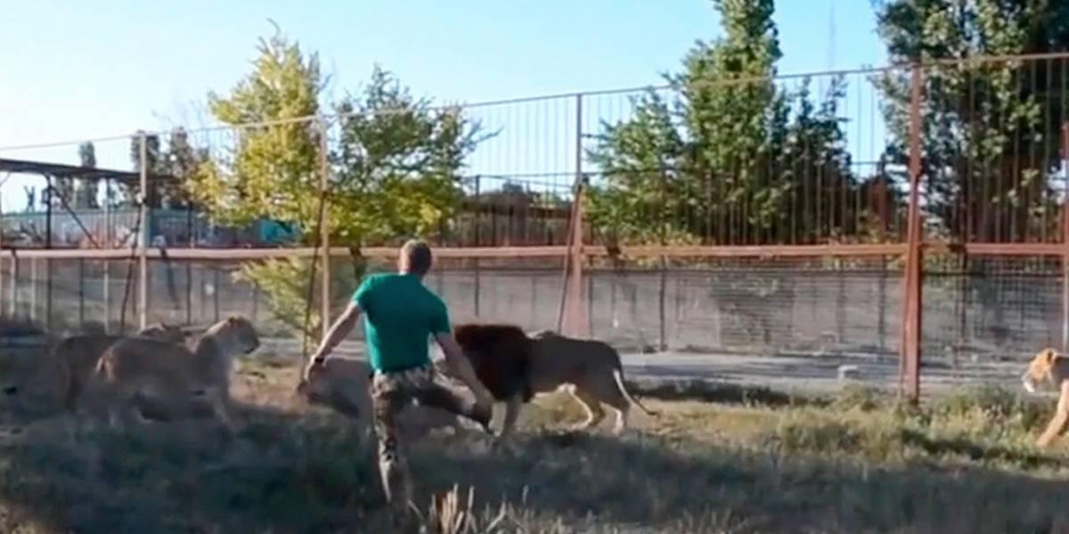 Vídeo viral mostra momento em que homem entra em recinto de leões para separar luta na Rússia