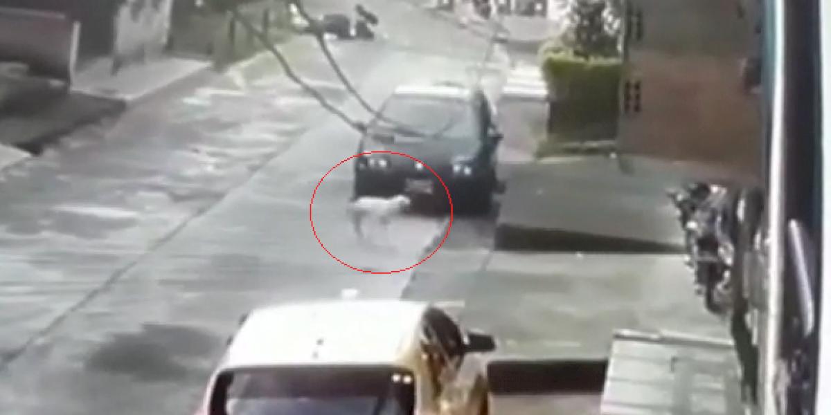 ¡Absurdo! Perro callejero entró a una casa por error y lo lanzaron por la ventana