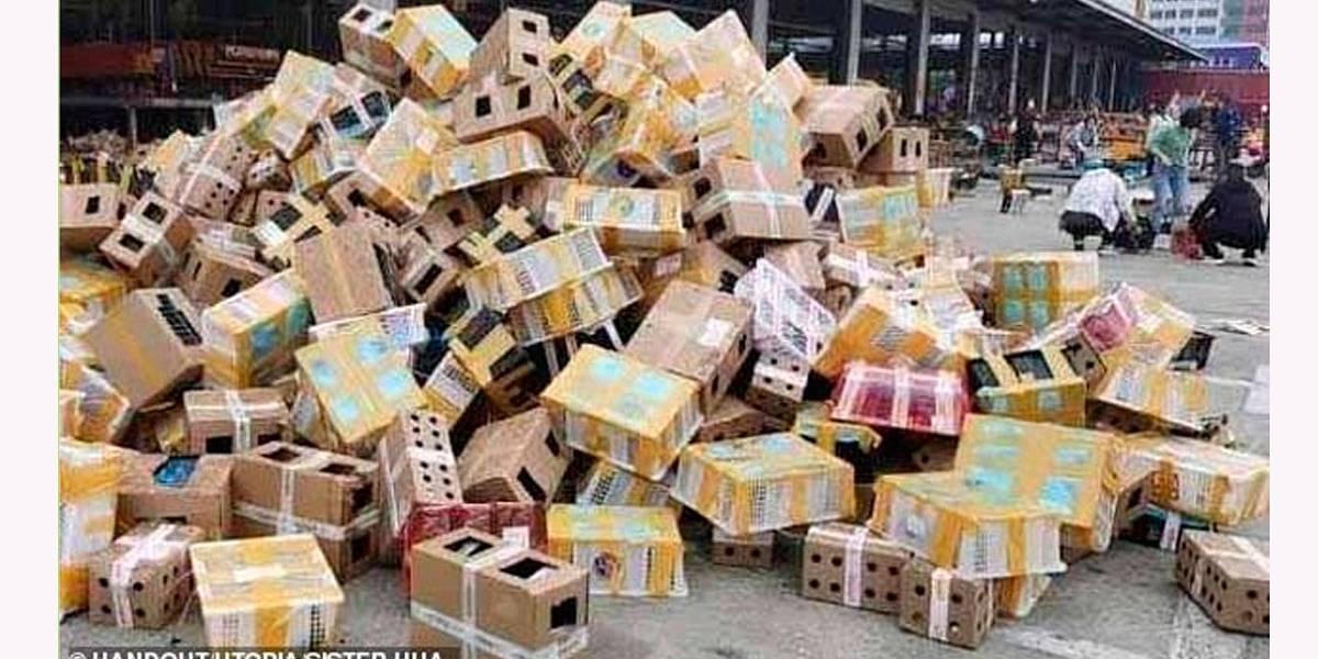 Milhares de cães e gatos são achados mortos em caixas na China