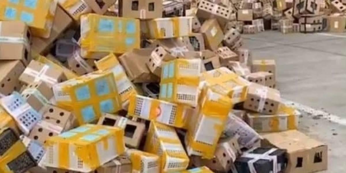 Macabro hallazgo en China: encuentran más de 5 mil mascotas muertas en cajas de encomienda