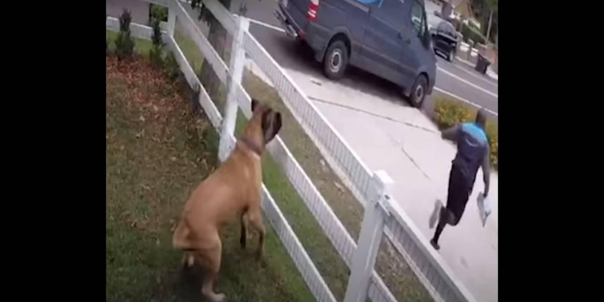 Vídeo registra entregador pulando cerca para fugir de cachorro que só queria brincar
