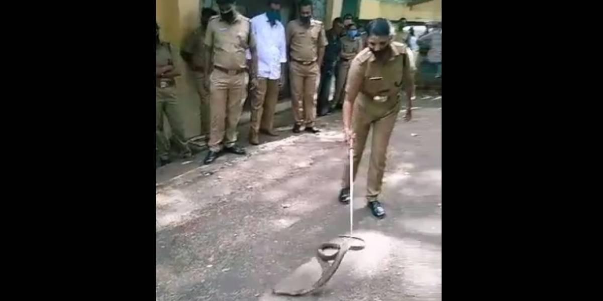 Vídeo mostra como oficial faz para capturar cobra de forma segura na Índia