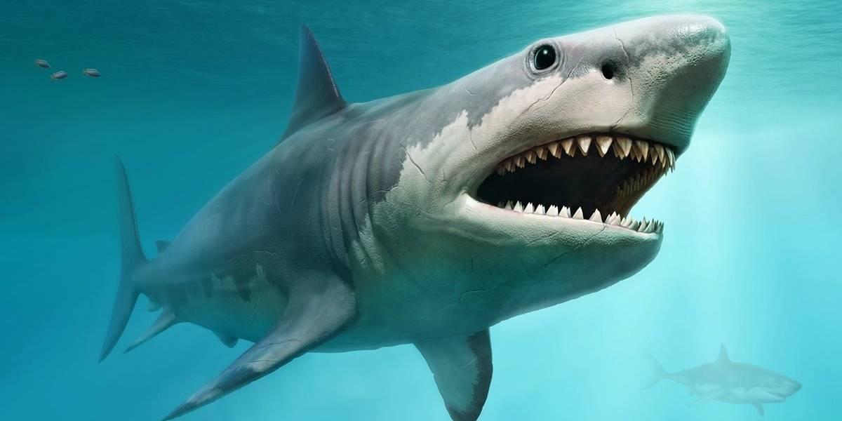 Estas siete criaturas marinas son mucho más peligrosas que un megalodón
