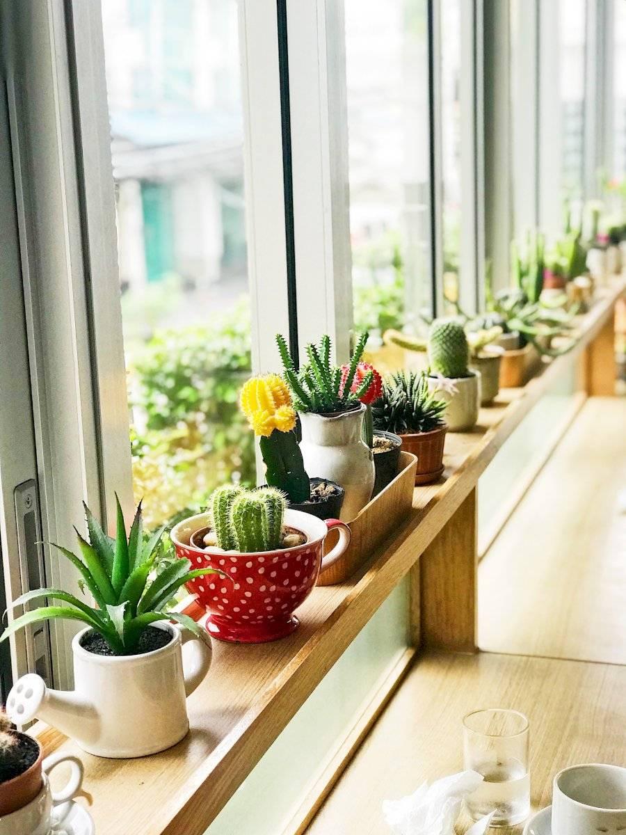 Los cactus reavivan los espacios
