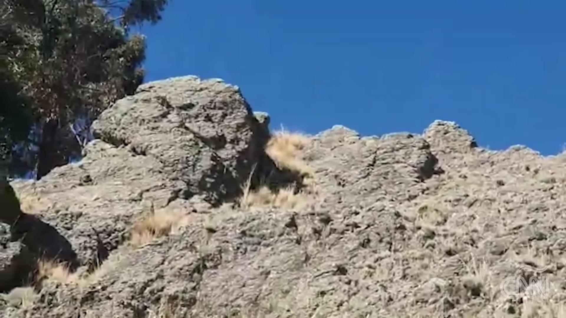 Los Simpson Piedra Bolivia