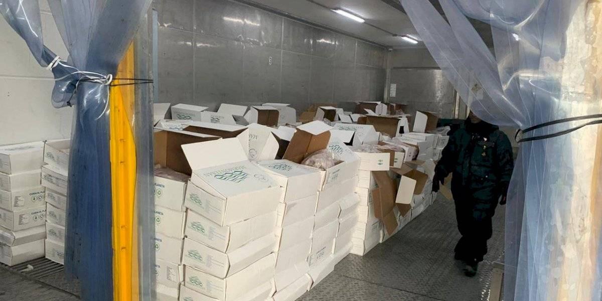 Policía decomisa 1,4 toneladas de cocaína escondida en cajas de pescado, su destino era Bélgica