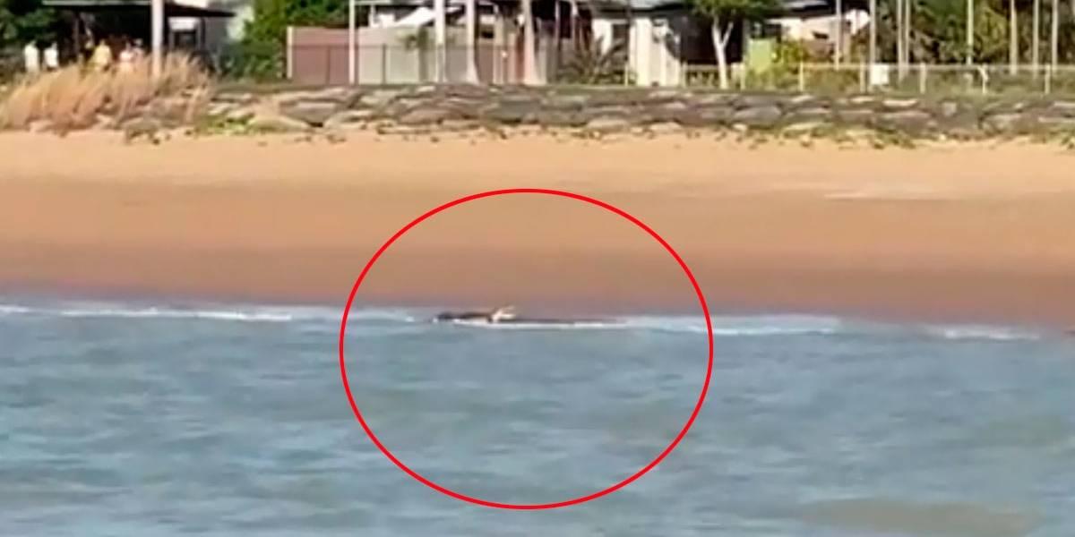 Crocodilo enorme é avistado em praia da Austrália