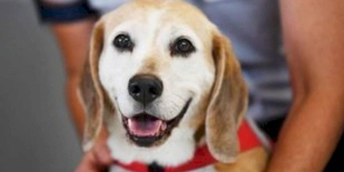 La gente está indignada: sujeto colgó a su perro y le cortó los testículos
