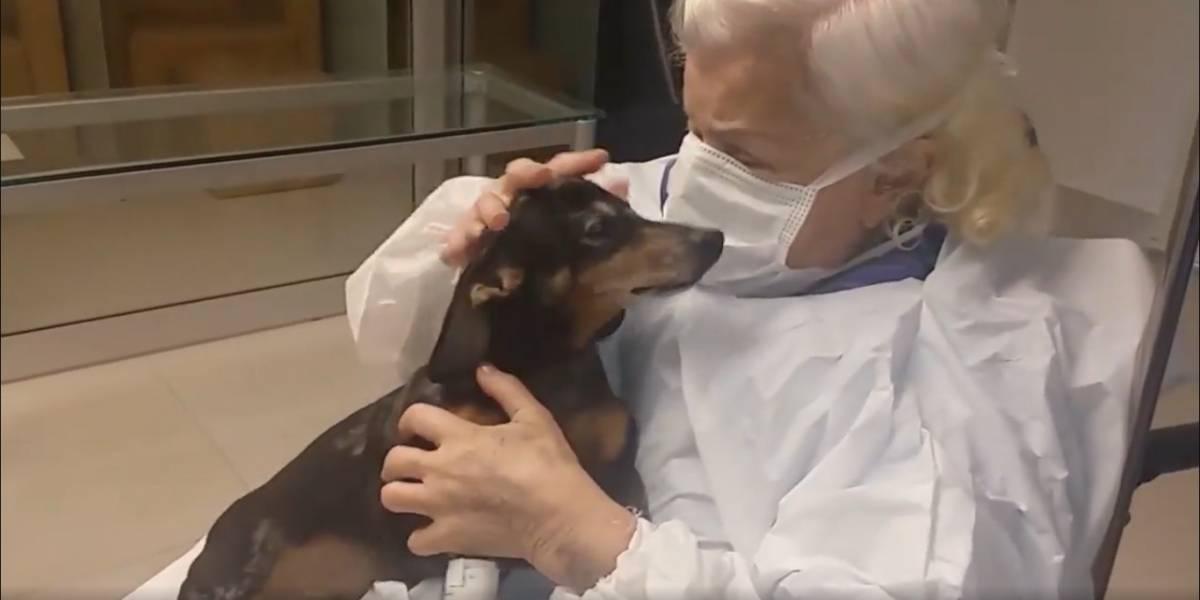 Idosa protagoniza reencontro emocionante em hospital, após 6 meses sem ver seu cachorrinho; assista