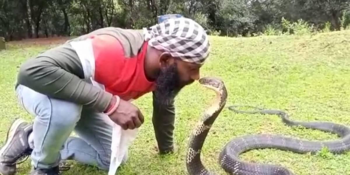 Vídeo mostra momento em que homem beija cobra-rei; espécie é a maior cobra venenosa do mundo