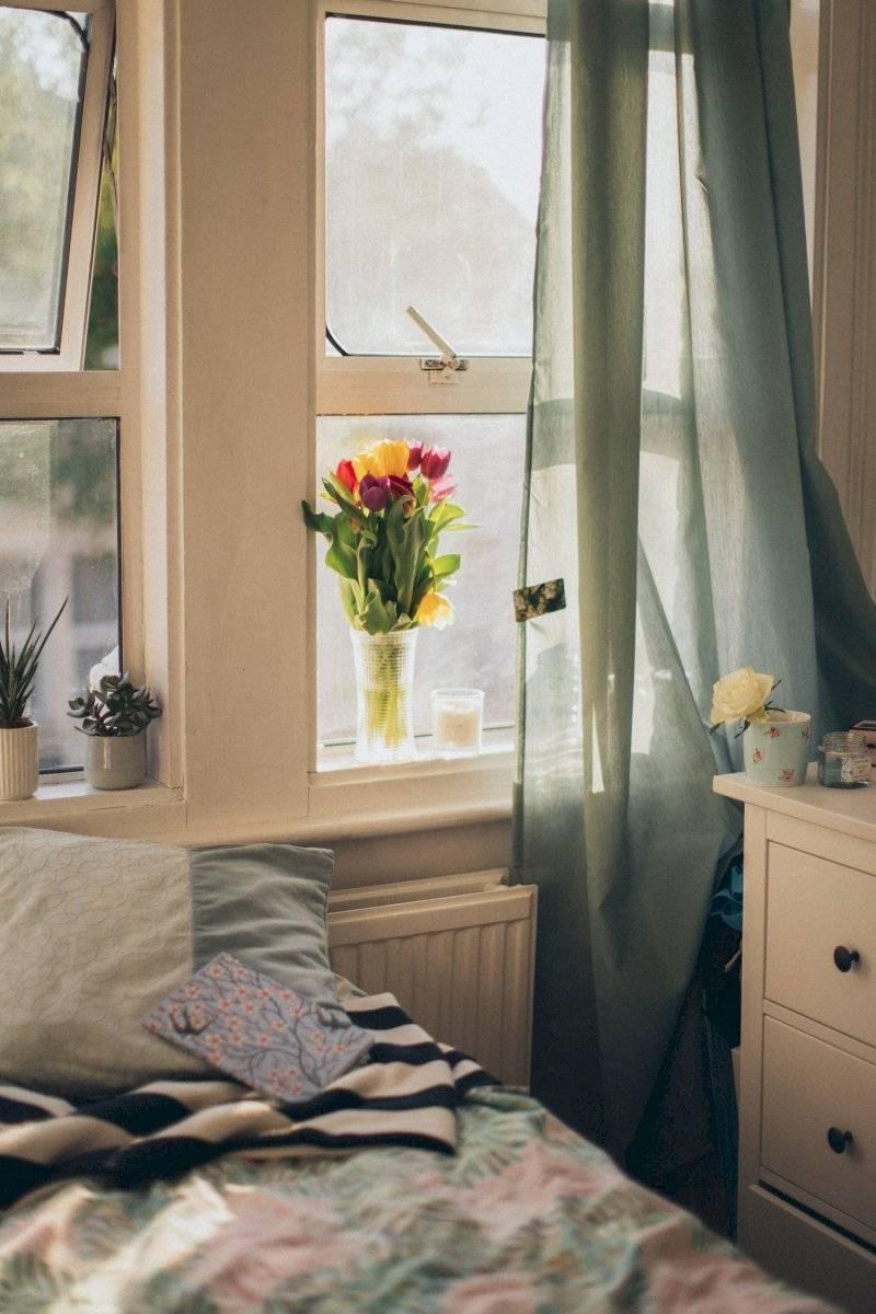 decorar ventanas con plantas
