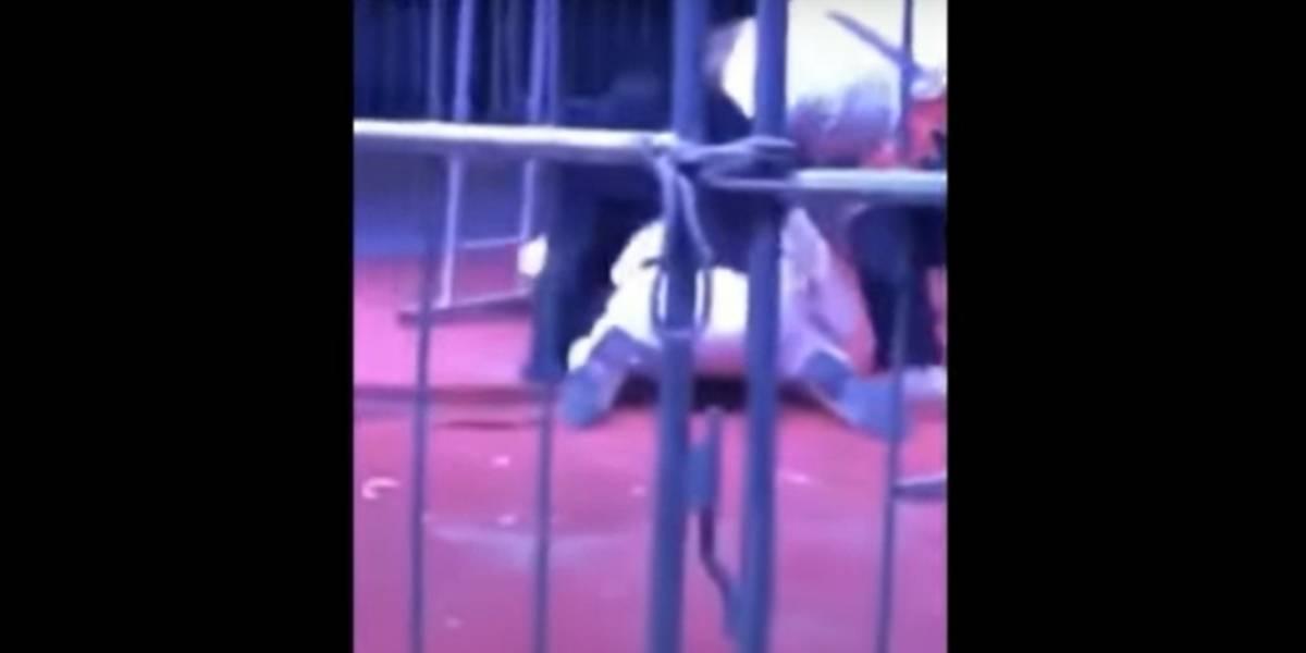 Vídeo registra momento de tensão em que urso de 200 quilos ataca treinador em circo na China