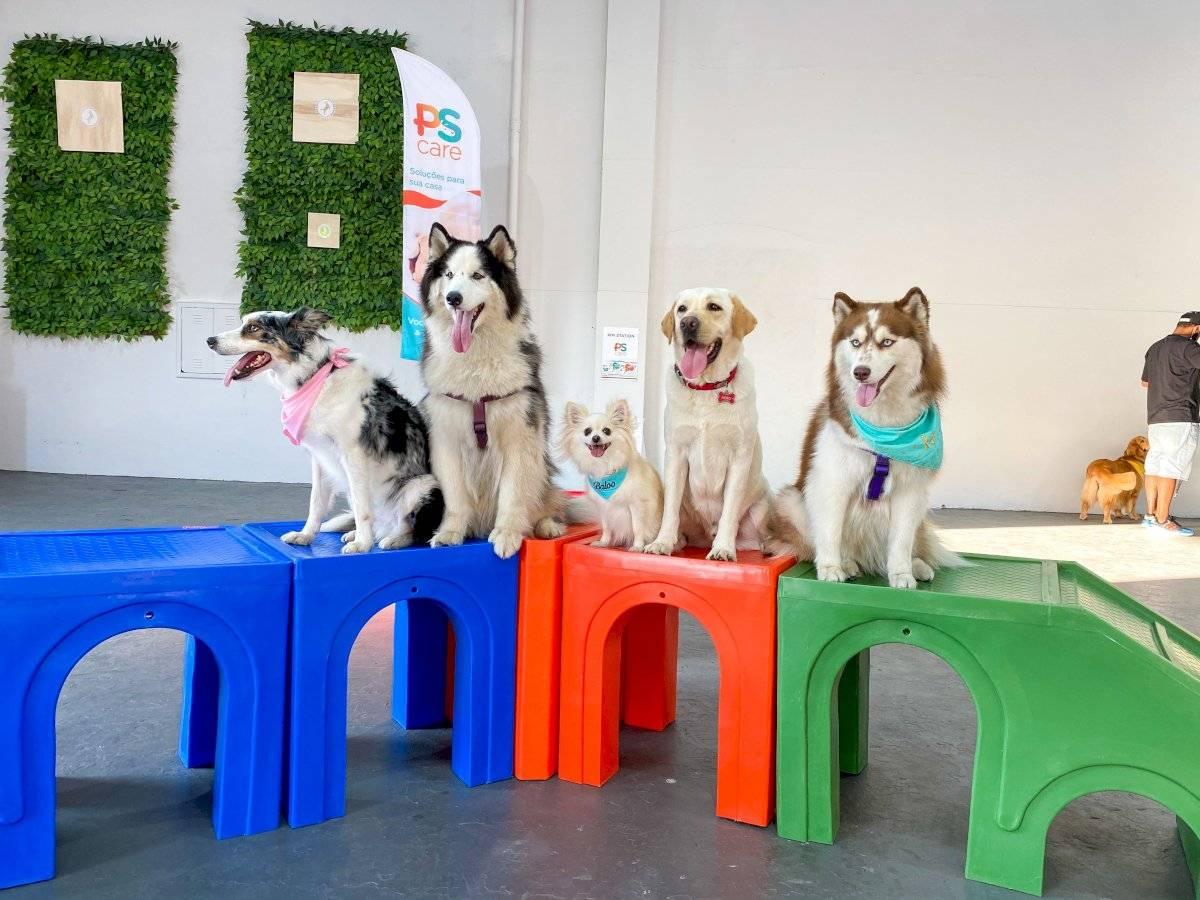 cachorros pódio