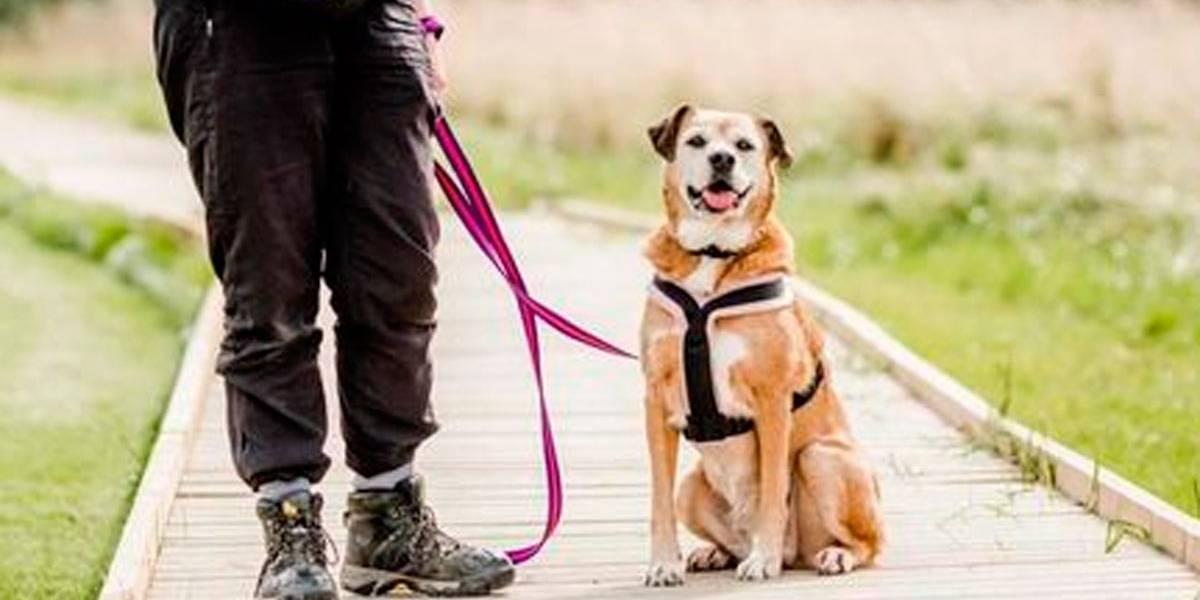 Abandonado há 11 anos em canil, 'cão mais triste do mundo' busca um lar
