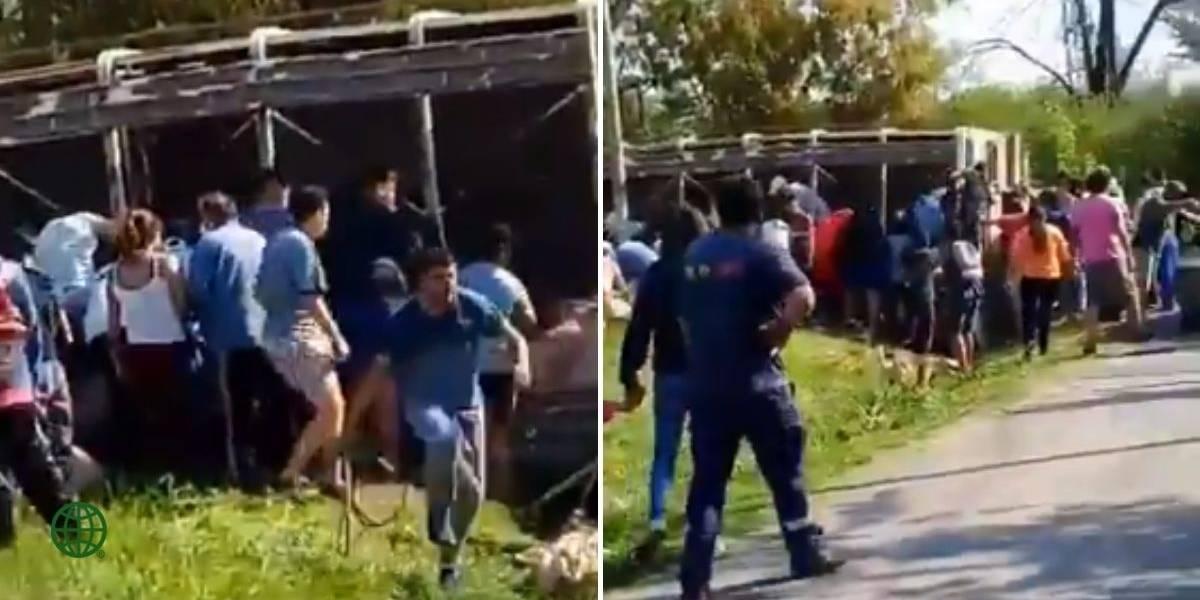 ¡Qué horror! Camión que transportaba cerdos se volcó y saqueadores mataron a los animales para llevárselos