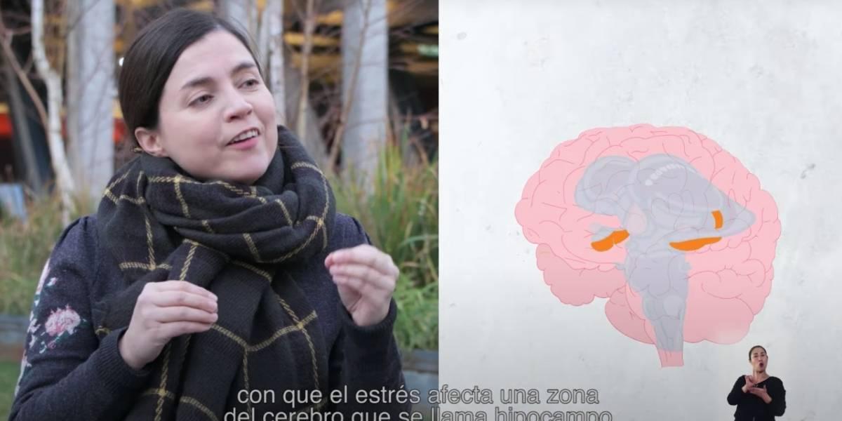 """""""Cerebro sin filtro"""": la web serie científica que explica como funciona este órgano"""