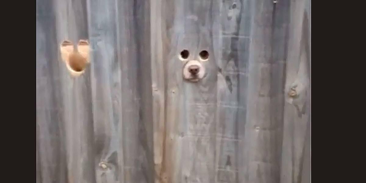 Vídeo: mulher faz 'máscara' em cerca para cachorro olhar a rua