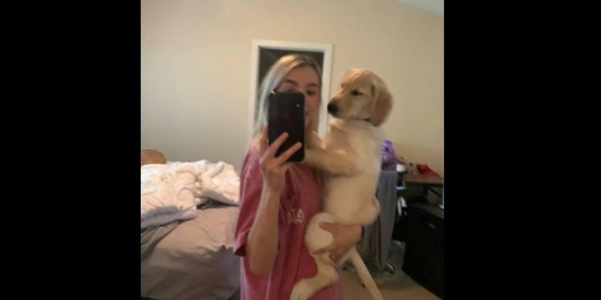 Foto de cãozinho com 'bumbum na nuca' viraliza no Twitter