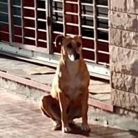 Cadela espera na porta da livraria a dona que faleceu em setembro