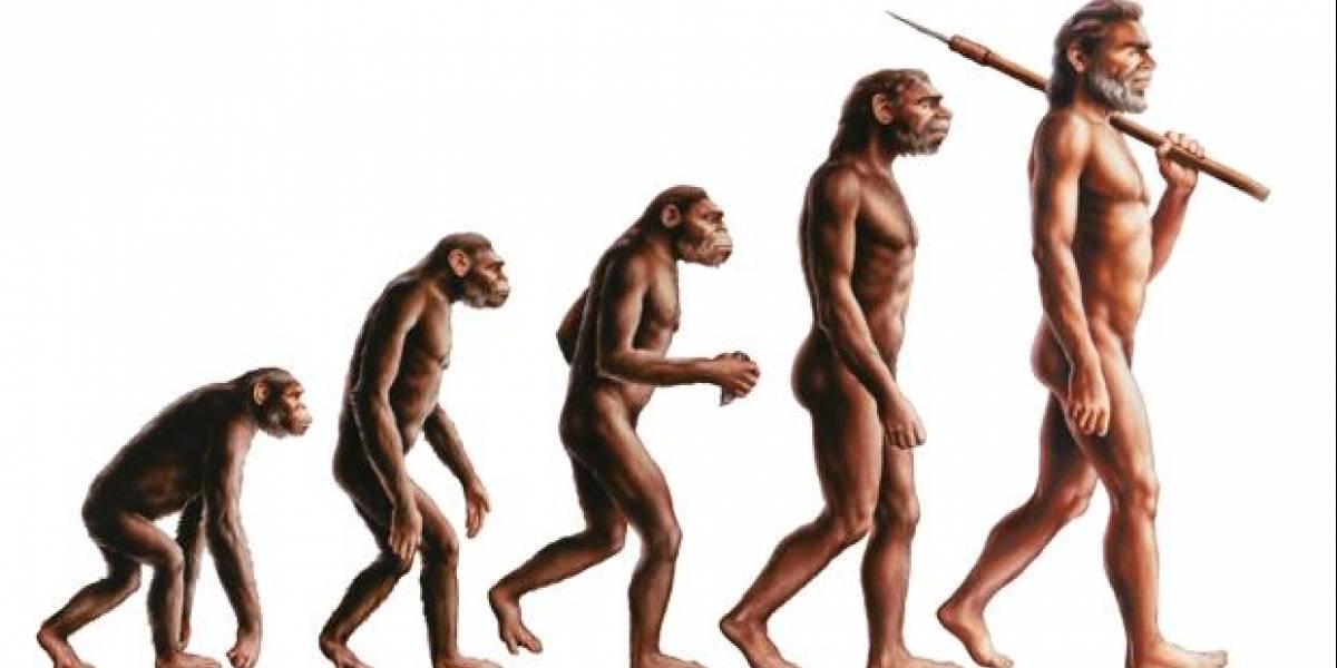 Estudio: la raza humana sigue evolucionando y los científicos lo demuestran a través de la presencia de una arteria