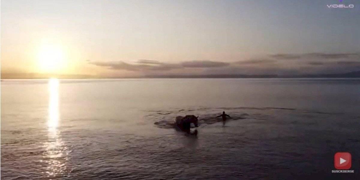 ¿Apareció el monstruo del Lago Ness...? No, era un caballo