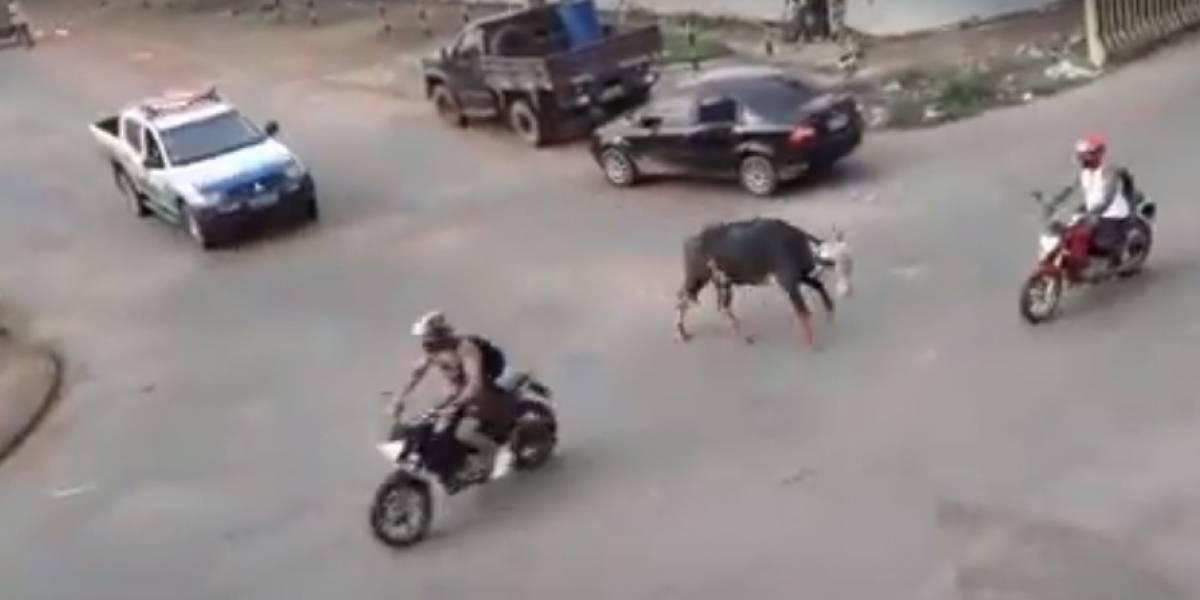 Vídeo registra momento desesperador em que búfalo descontrolado ataca e fere pessoas