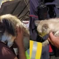 Rescatan un perro y un gato que se encontraban atrapados bajo los escombros tras explosión en Cumbayá