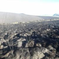 Incendio en Reserva Ecológica Antisana fue liquidado tras tres días de labores