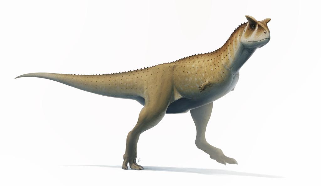 Uno de los dinosaurios más curiosos, el Carnotaurus.