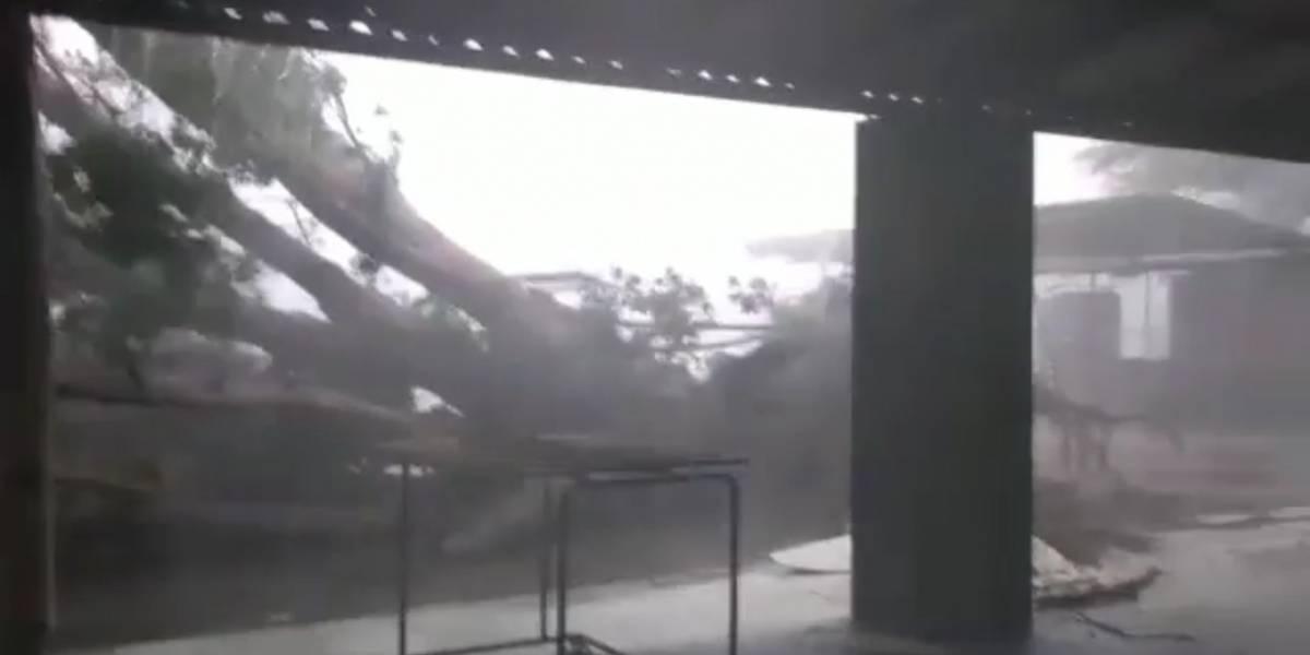 Vídeo registra momento impressionante em que árvore é arrancada do chão com força da chuva