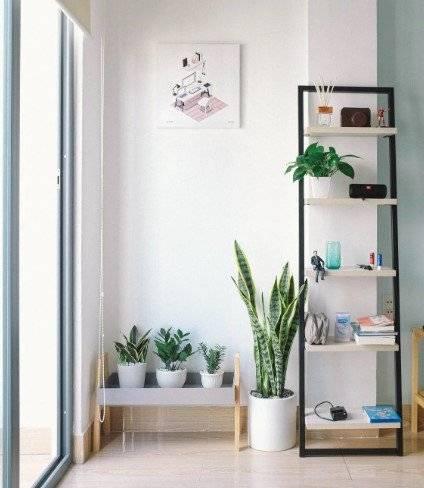 Plantas dentro de la casa