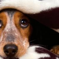 5 dicas para cães que tem medo de trovão