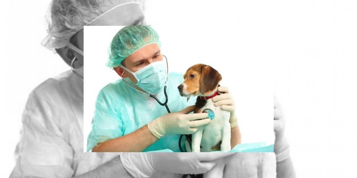 Estos son los beneficios que disfrutará su mascota si está afiliado al Sisbén en Pereira